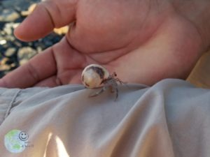 little_crab_galapagos