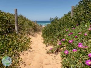 pink_flowers_at_the_beach