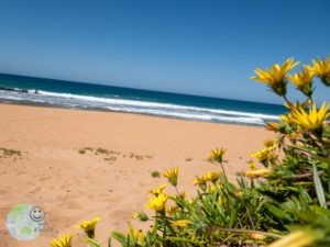 flowers_at_the_beach